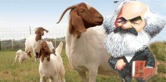 goat-karl-marx-making-india