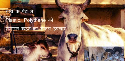 cow polythene remedy making india