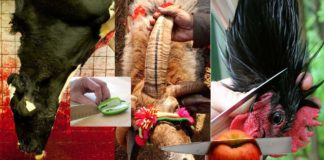 edible living things fruits vegetables beef making india